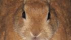 Come fare amicizia con un coniglio