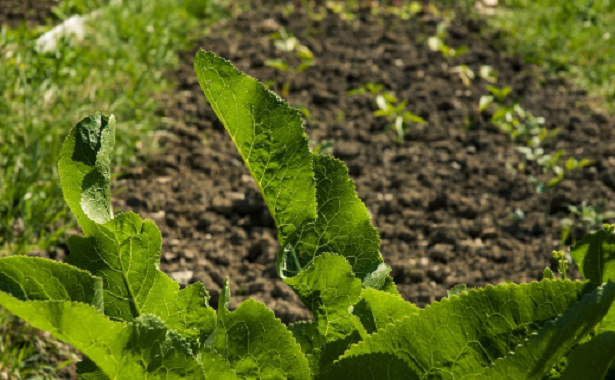 Come proteggere l'orto da gatti e cani