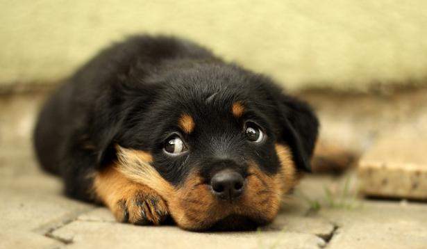 Abbandono cani, storie a lieto fine