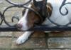 Cosa fare quando si trova un cane abbandonato