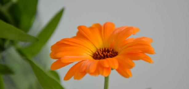 Come fotografare i fiori