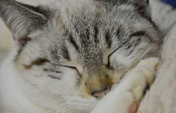 Dove dormono i gatti