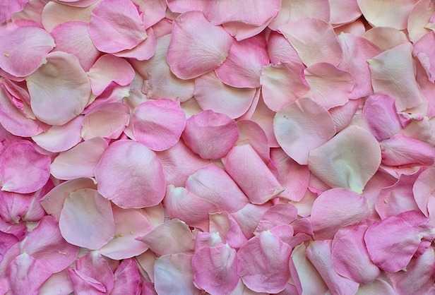 sciroppo di rose ricetta