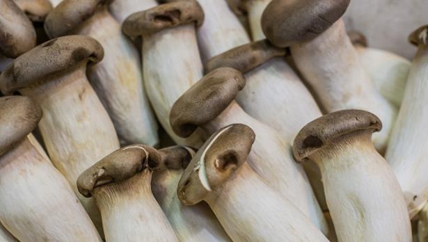 Come coltivare funghi nella paglia