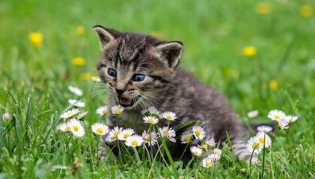 Cosa dare da mangiare ai gatti