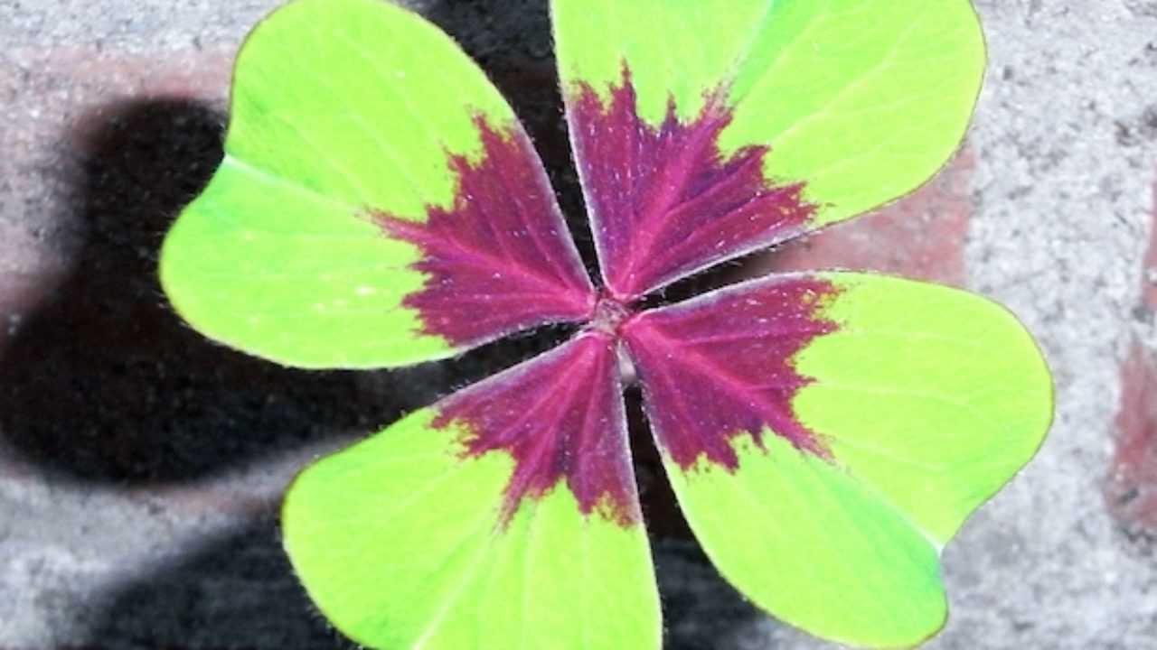 Rampicanti Che Crescono All Ombra piante da ombra - idee green