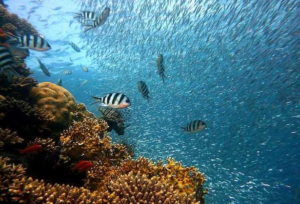 come vedere la barriera corallina australia