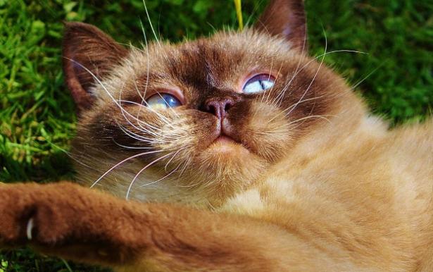 Cosa fare se il gatto si gratta