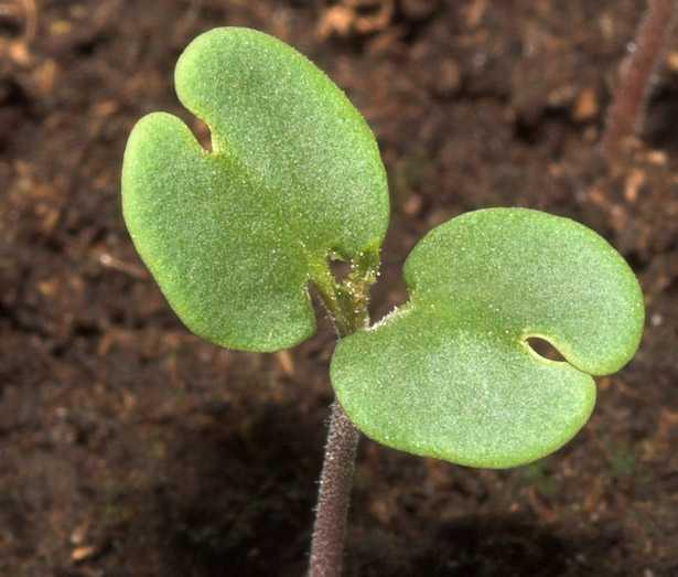piante angiosperme e gimnosperme