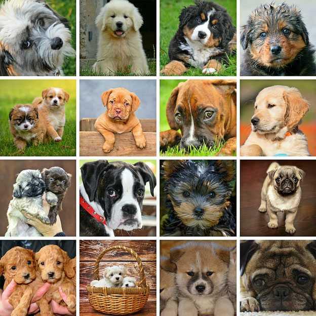 Tutti i tipi di cane