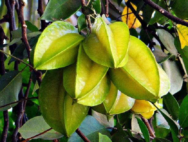 Frutti esotici rari da provare