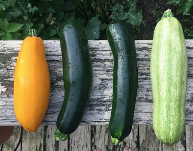 Le proprietà delle zucchine