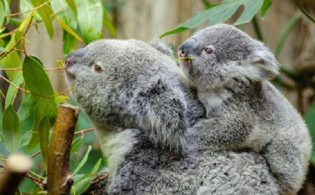 Le dieci madri migliori del mondo animale