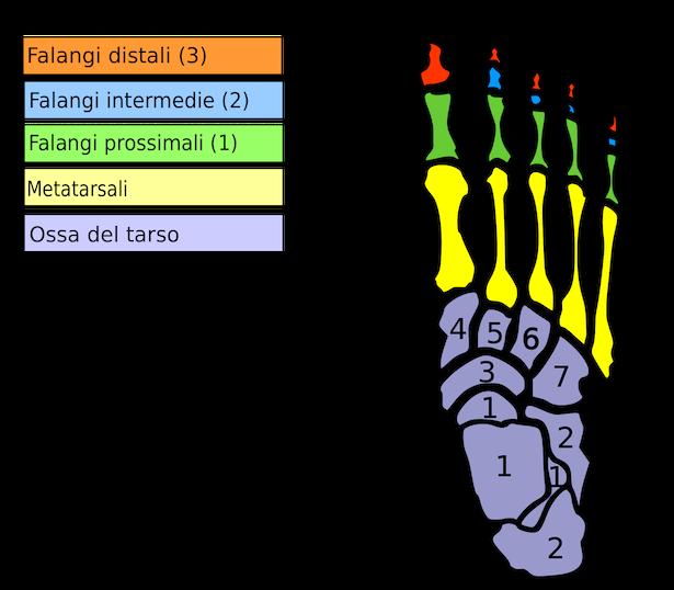 nomi dita piedi