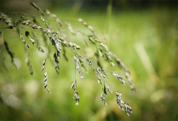 Piante Allergeniche - Piante che provocano allergie