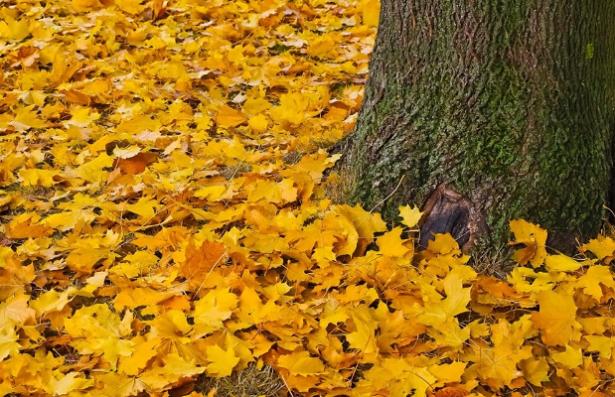 Come spiegare l'autunno ai bambini