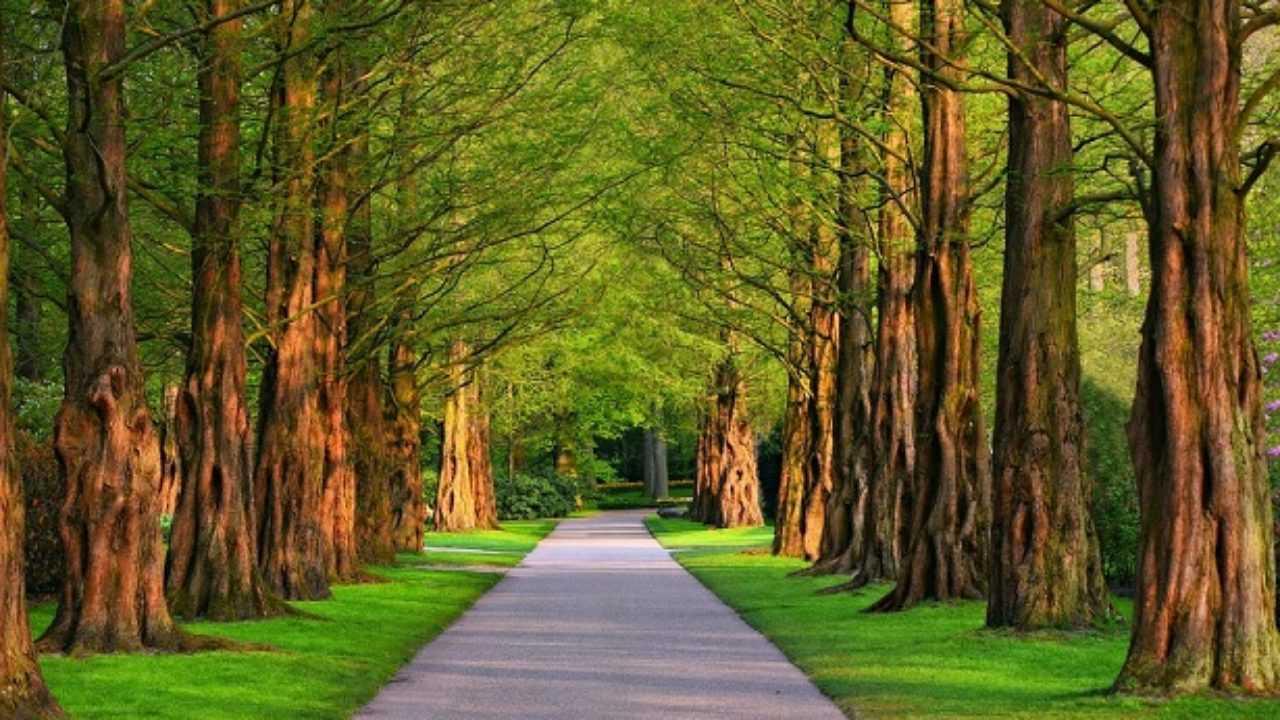 Alberi Ad Alto Fusto Quali Sono alberi ad alto fusto: tipologie, caratteristiche ed elenco