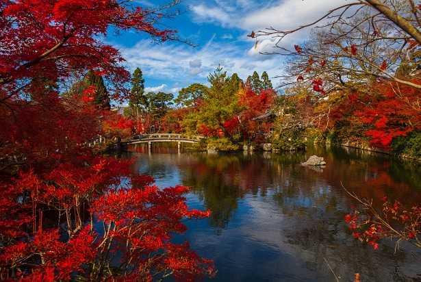 alberi-giapponesi