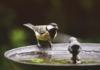 Come costruire un Birdgarden