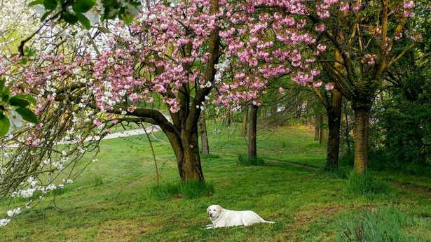 foto cane Amira
