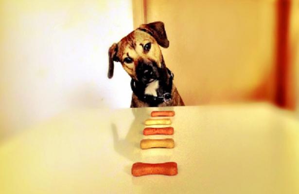 Come cambiare alimentazione ai cani