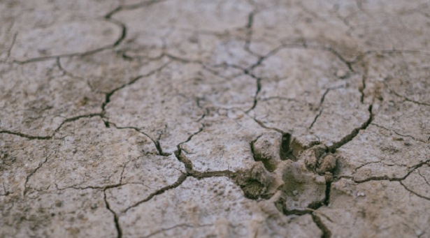 Come combattere la desertificazione