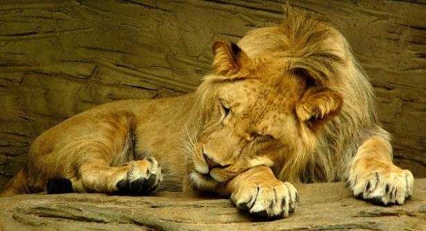 come dormono gli animali