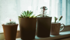 Come proteggere le piante dal riscaldamento