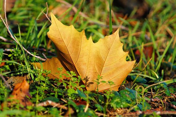 foglie ingiallite