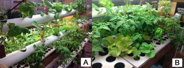 idroponica: esempi di colture