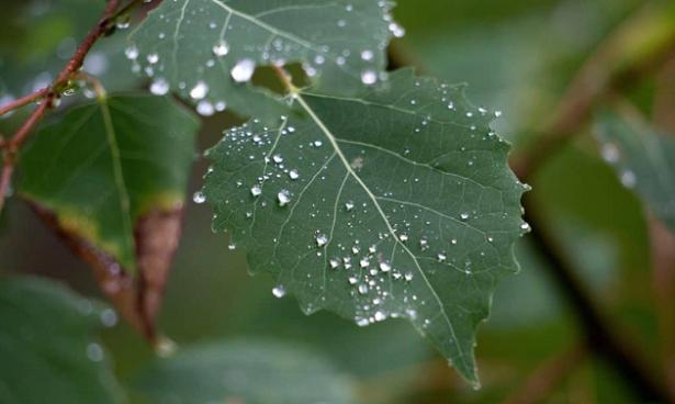 Come proteggere i fiori dalla pioggia