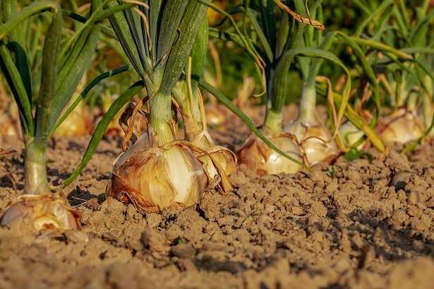 Rotazione triennale delle colture