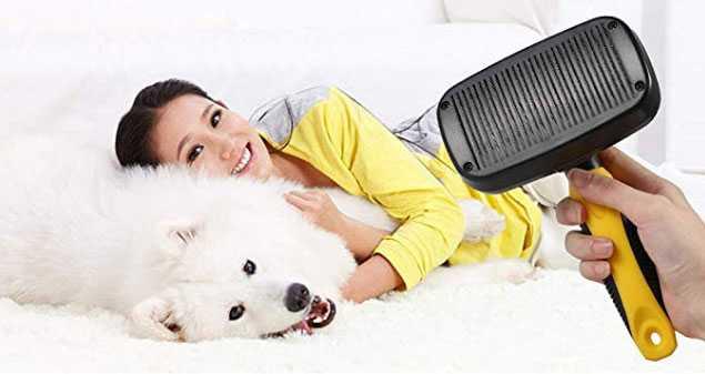 migliori spazzole per cani