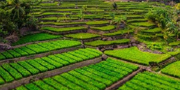 Rame in agricoltura biologica