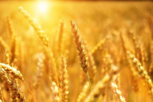 biostimolanti agricoltura