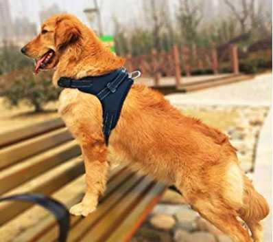 pettorina per cani economica