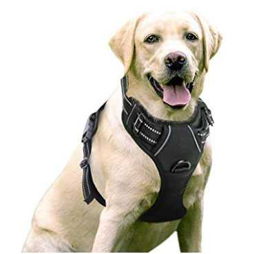 pettorina per cani regolabile