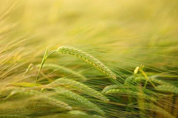 agricoltura-organica