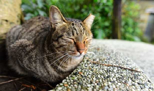 come parlano i gatti