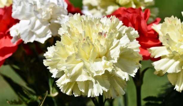 Quanti sono i petali dei fiori