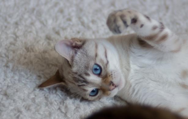 Come accarezzare un gatto