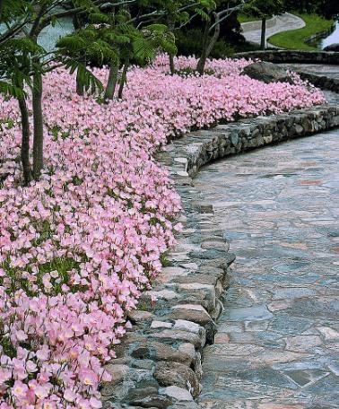 bordure fiorite