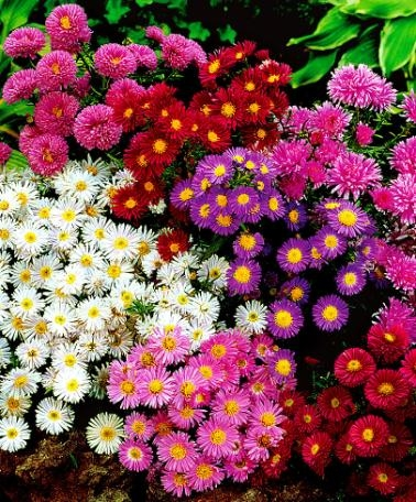 fiori variopinti