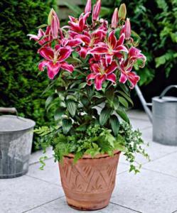 piante-ombra-6
