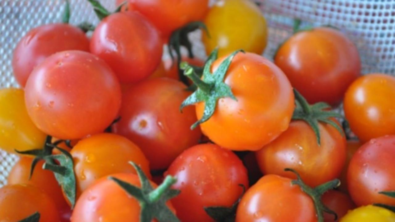 Come Coltivare Pomodori Sul Balcone cosa coltivare sul balcone a maggio - idee green