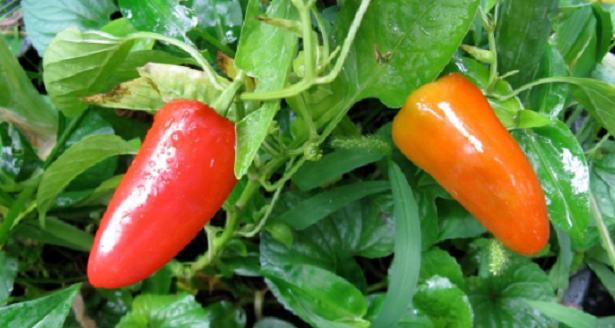 Cosa coltivare sul balcone a maggio