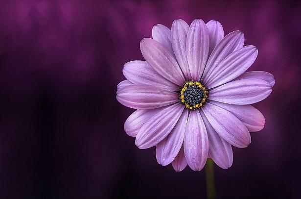 piante-viola
