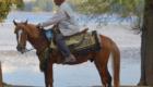 cavallo berbero