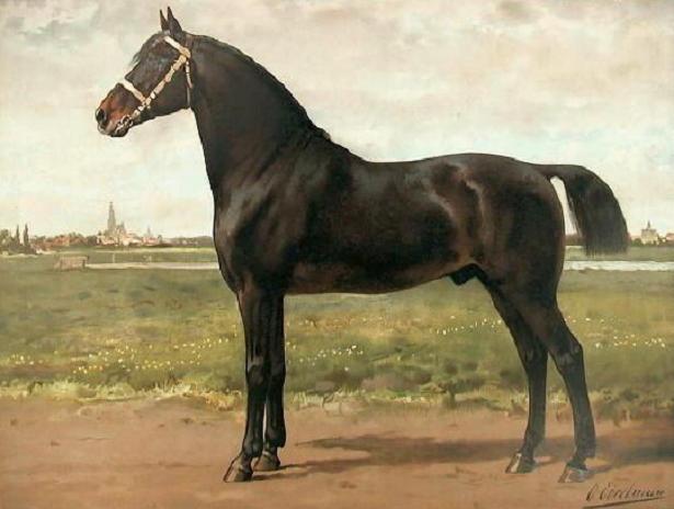 Cavallo-Groningen