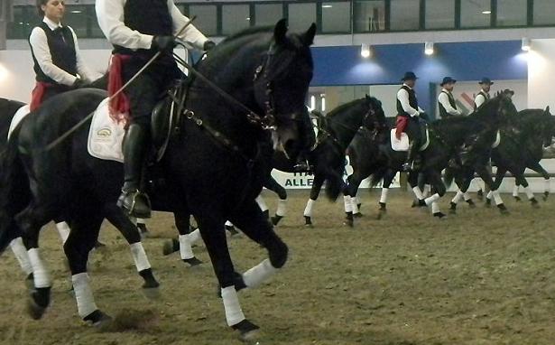 manifestazione cavalli murgesi